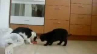 2 кошки из одной миской