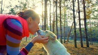 ЭЛИТНЫЕ ЩЕНКИ редкостной аборигенной породы:Грузинская горная собака. Киев, Украина