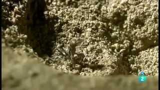 """Documental de Animales de la Selva """"Camuflaje"""""""