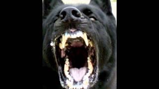 lil arf  ghost dogs instrumental