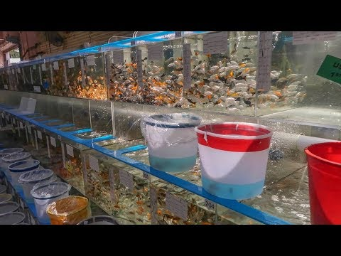 LARGEST WHOLESALE FISH STORE!!