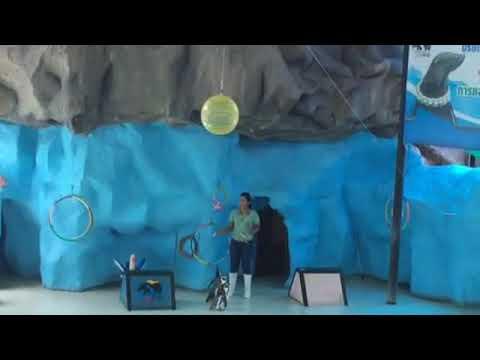 180318 Seal & Penguin Show สวนสัตว์สงขลา Songkhla zoo Thailand