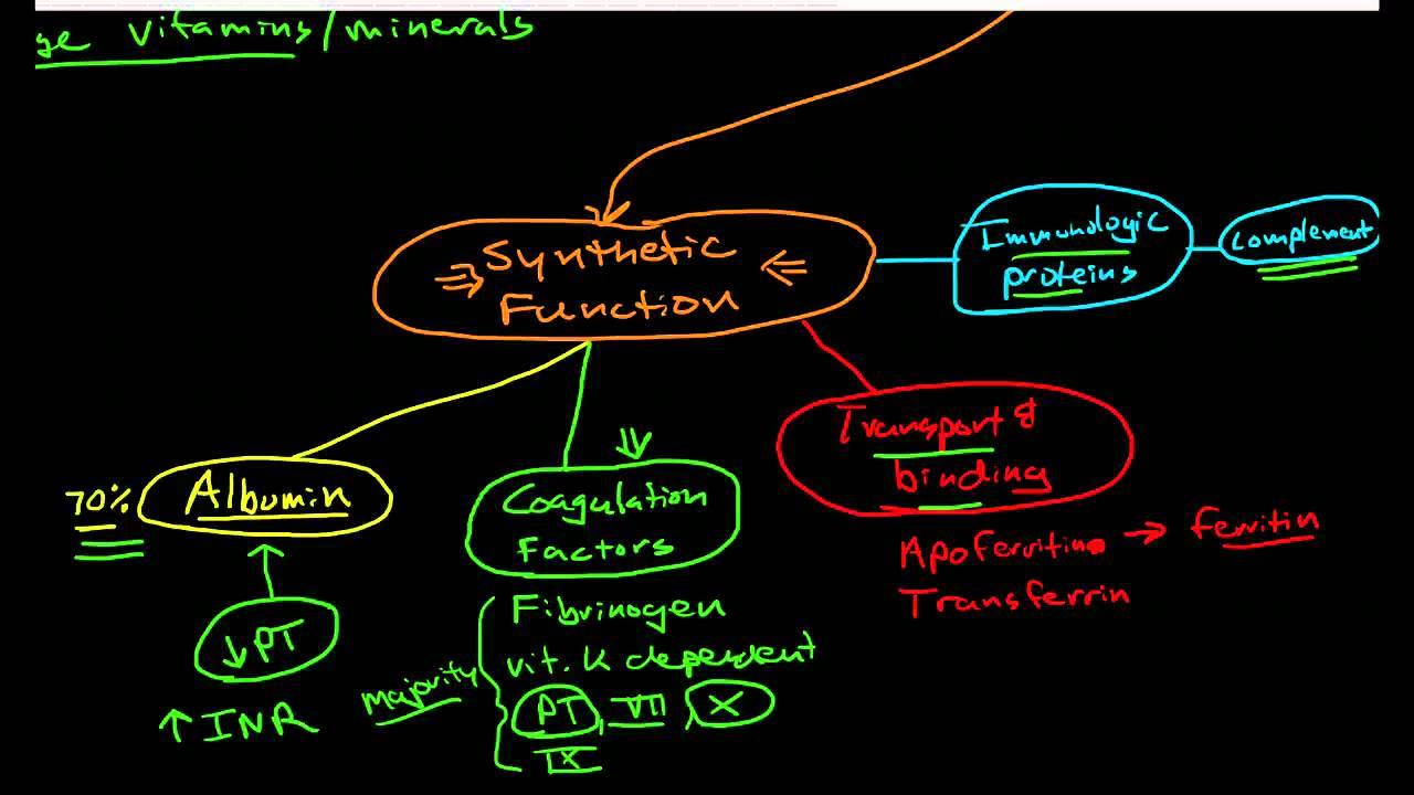 Hepatic Physiology 1 Functions Of The Liver Youtube