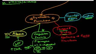 Hepatic Physiology