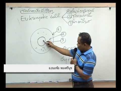 ตัวอย่างการสอน : เซลล์ของสิ่งมีชีวิต (ชีววิทยา อ.ธนะชัย)
