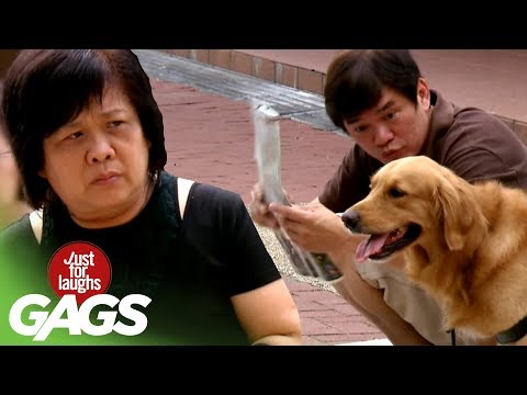 Guide Dog Leads the Way! - JFL Gags Asia Edition