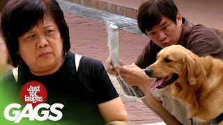 Guide Dog Leads the Way ! - JFL Gags Asia Edition