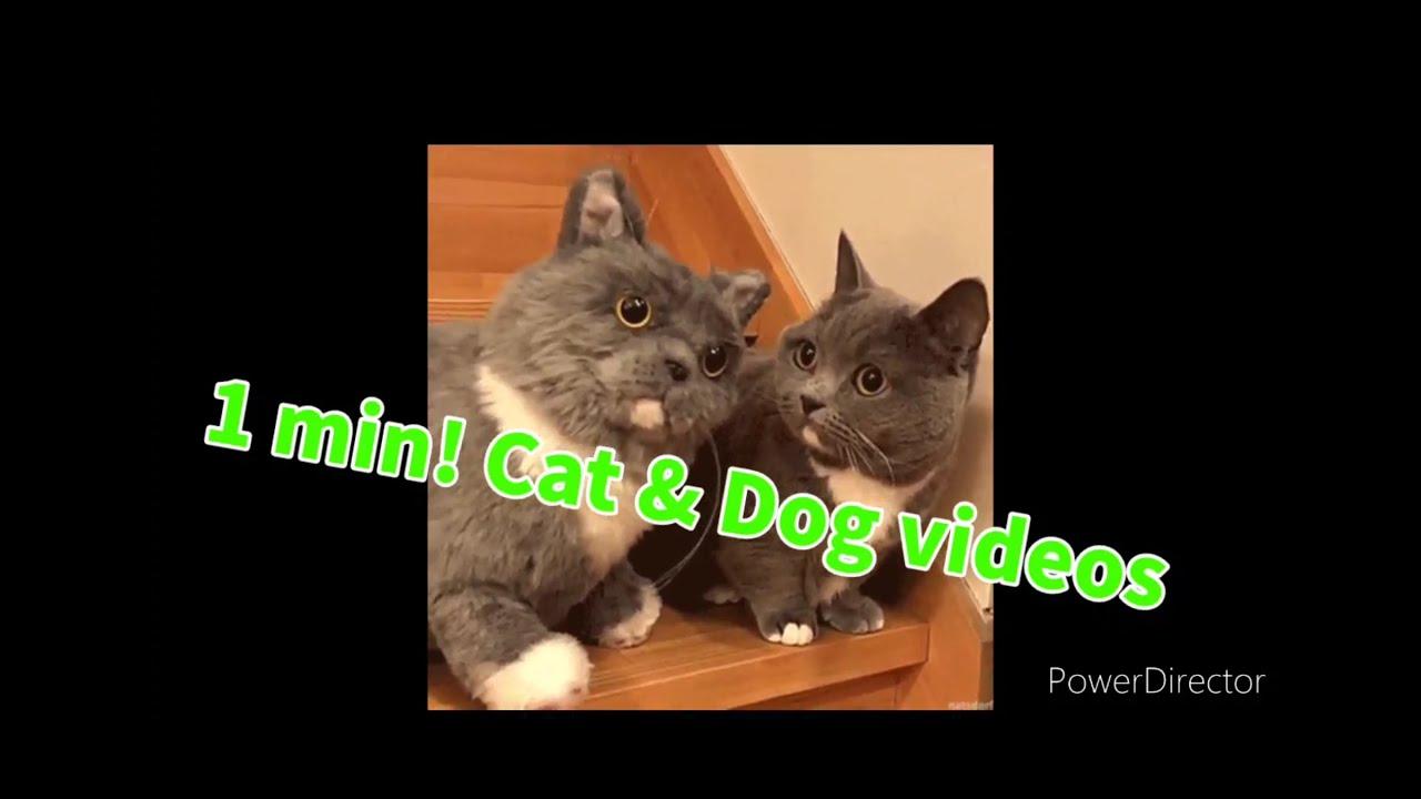 1 minute! cute cat &cute dog videos #15