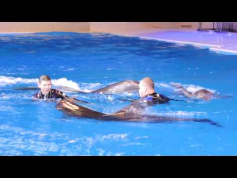 Dubai Dolphinarium Full Show (part 2) The Dolphins HD 1080p