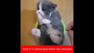 Depresyondaki kedi :) İzlenme Rekoru Kıran Kedilerin Komik Halleri