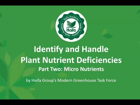 How To Identify And Handle Plant Nutrient Deficiencies - Part 2