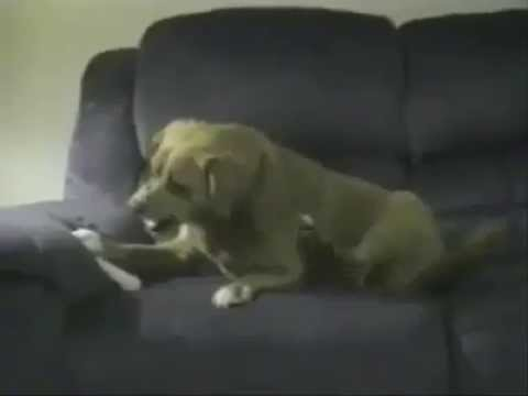 Dog Attacking His Own Leg Youtube