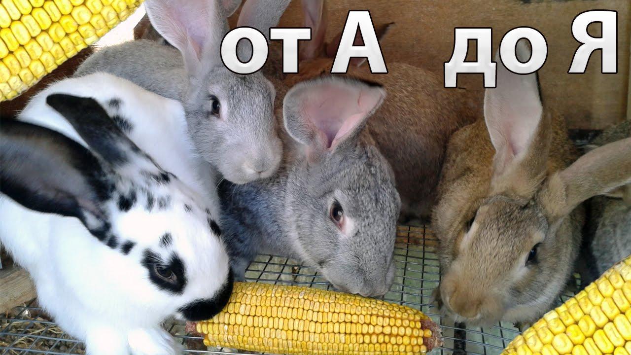 Самообеспечение. №6. Разведение кроликов без зерна. - YouTube