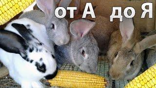 Рацион и корм для кроликов, комбикорм, кормление кроликов зимой.