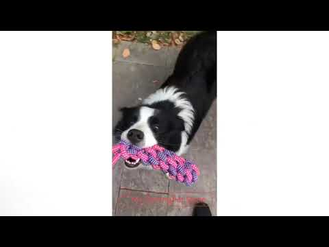 rope-ball-dog-toy