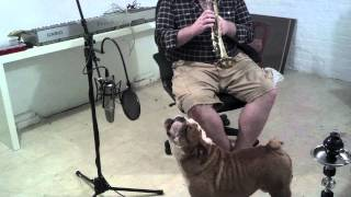 English bulldog sings happy birthday