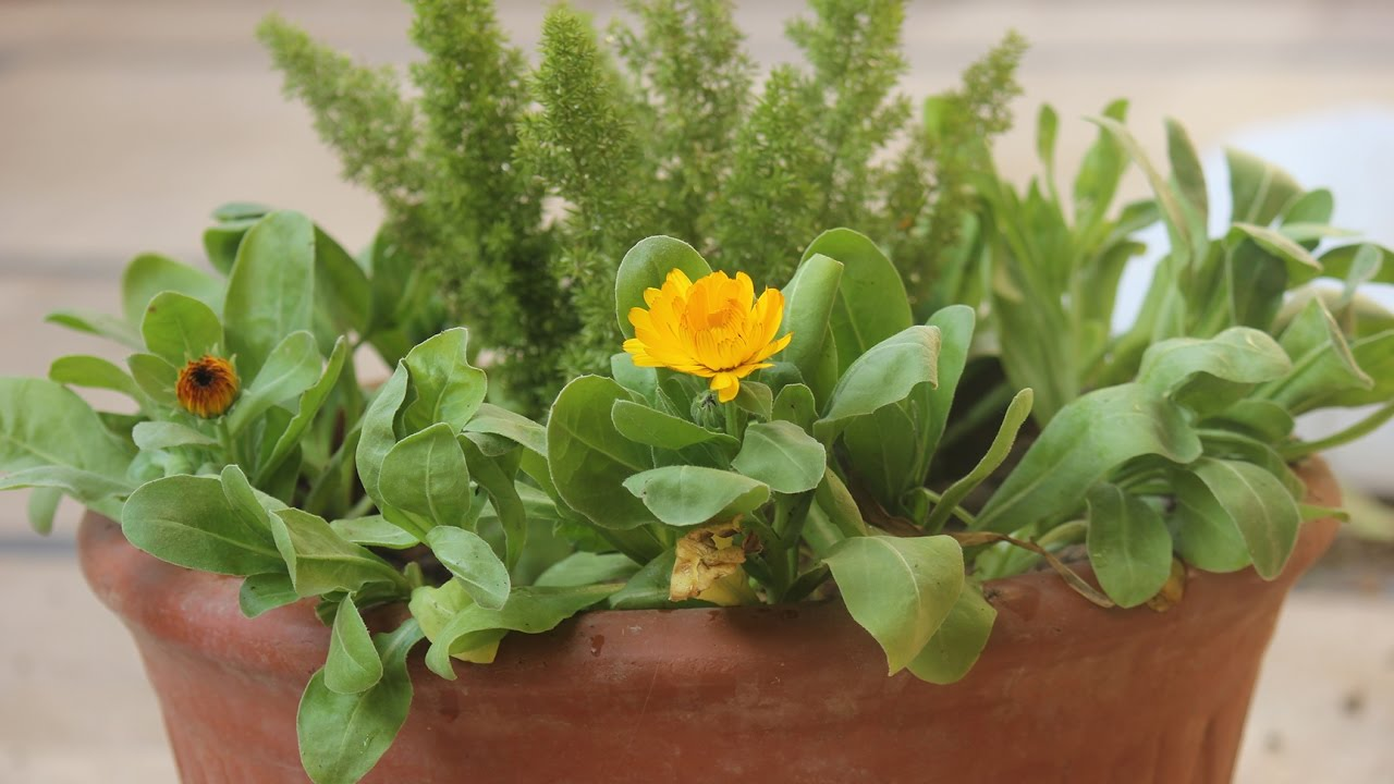 Potted Garden Why not plant some calendulamy little potted garden youtube my little potted garden workwithnaturefo