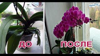 Как заставить цвести орхидею?Ответ есть,метод работает на 100%