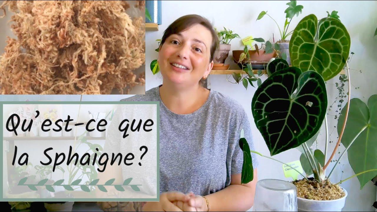 🌱Qu'est ce que la SPHAIGNE?   SUBSTRAT POUR PLANTES D'INTÉRIEUR (PLANTES TROPICALES)🌺