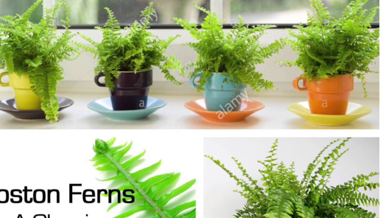 Top 5 indoor air filter plants air purifiers plants for Air filtering plants