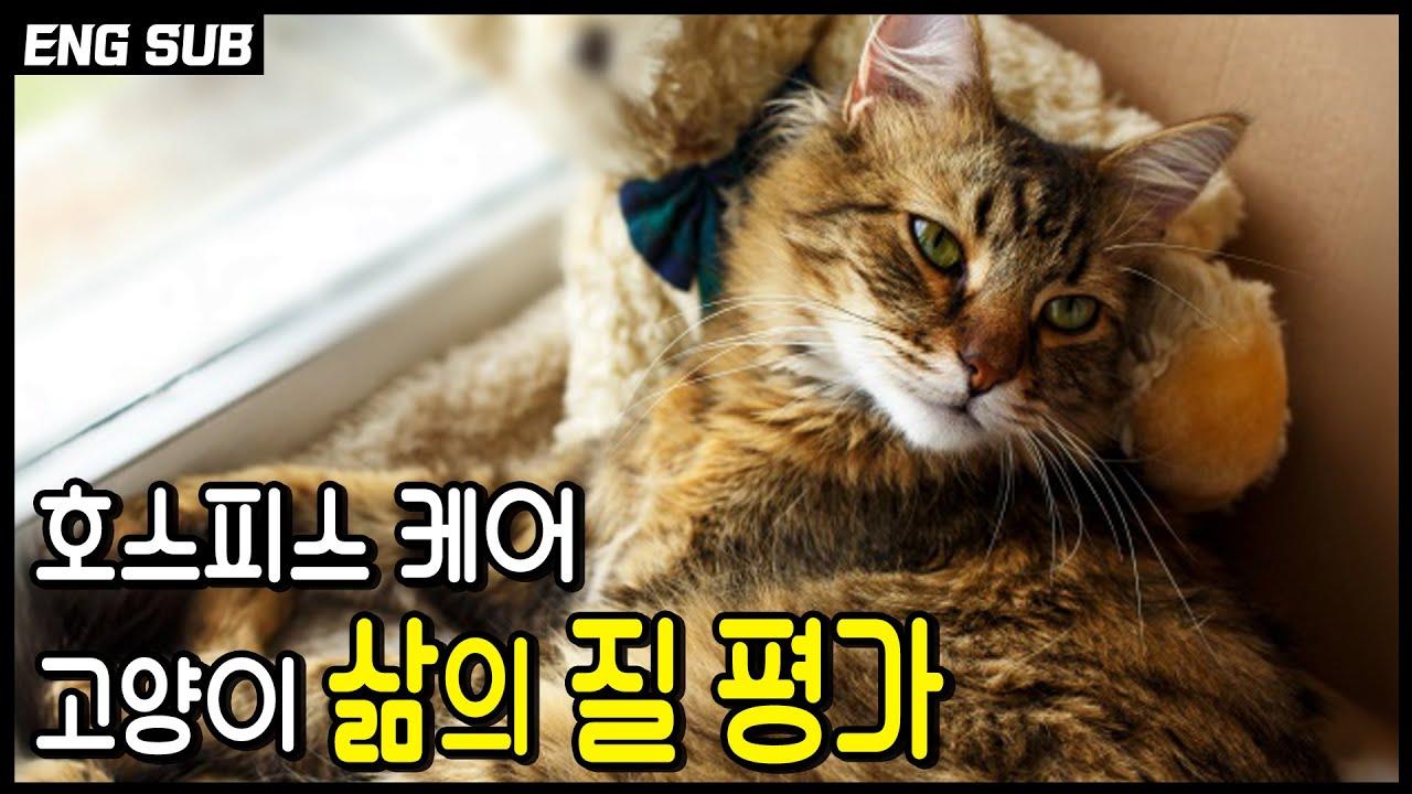 지금 내 고양이는 불편한건가 아픈건가? 고양이 마지막을 관리해 주는 방법들. 고양이의 마지막 삶을 평가하는 7가지 방법, 호스피스 케어.