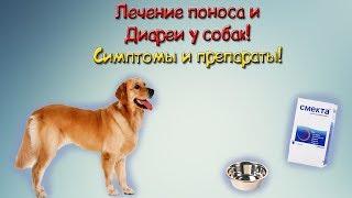 Диарея у собак Симптомы и Лечение!