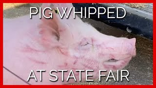 Скачать FFA Boy Whips Scared Pig In The Face Repeatedly At Iowa State Fair