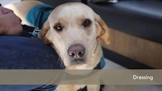 ISDA Dog Training Program - Core Skills: Level 1