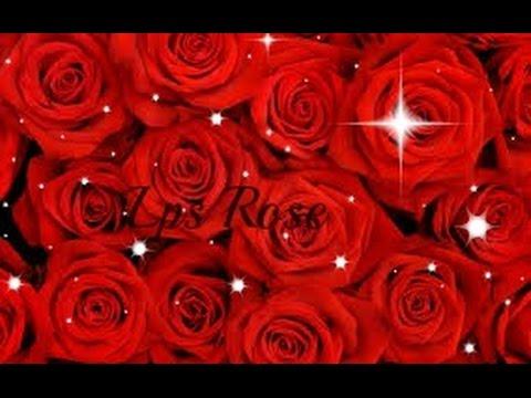 Lps Rose
