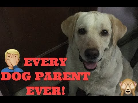 EVERY DOG PARENT EVER! | the funny side | Wildly Indian