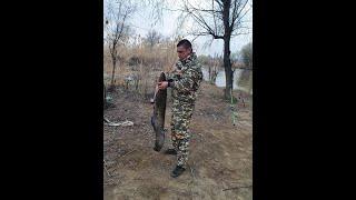 Рыбалка Астрахань 2020 Поймали сома Береговая охрана Жарим котлеты Вой шакалов Часть 3