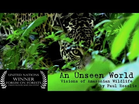 Amazon Rainforest Wildlife (United Nations Award Winner) - by Paul Rosolie