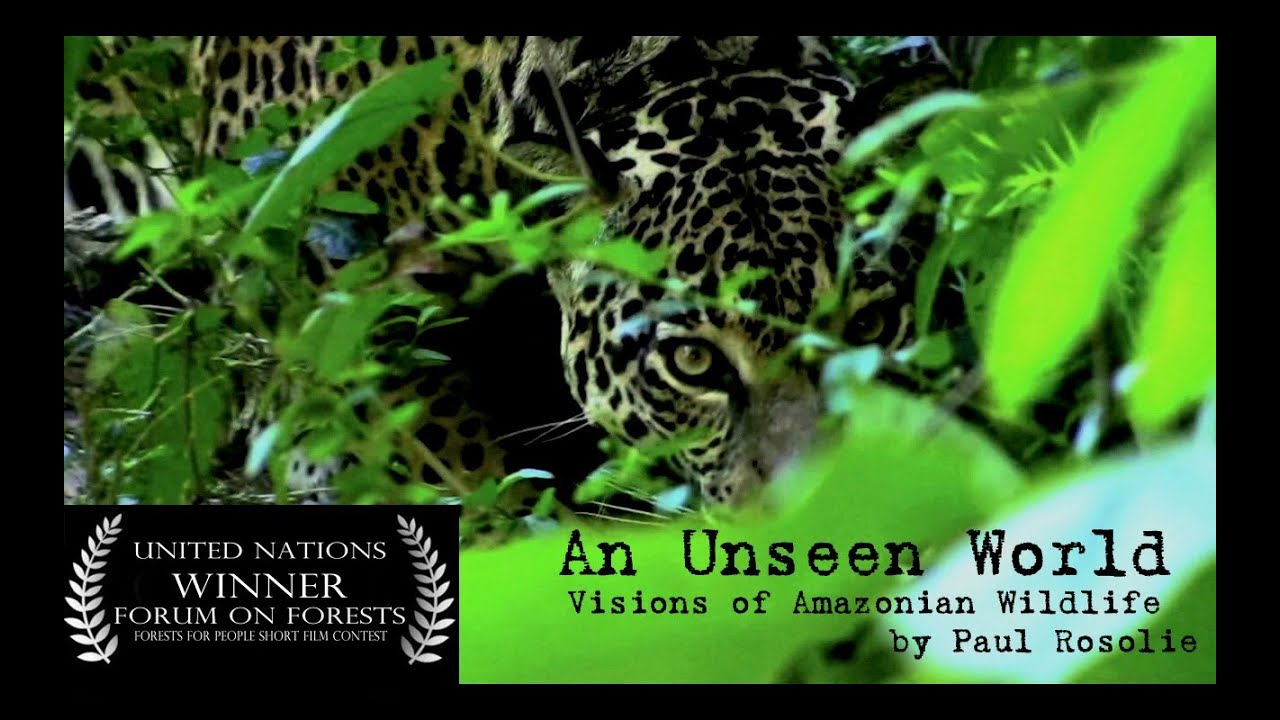 Amazon Rainforest Wildlife United Nations Award Winner