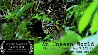 Amazon Rainforest Wildlife (United Nations Award Winner) - by Paul Rosolie
