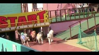 【わんわんランド】ドッグレース 1番速い犬は誰?