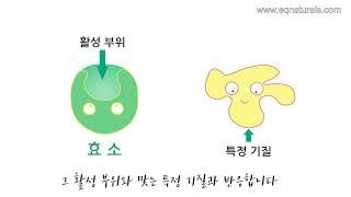 2. 효소란?