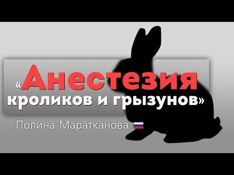 Анестезия кроликов и грызунов