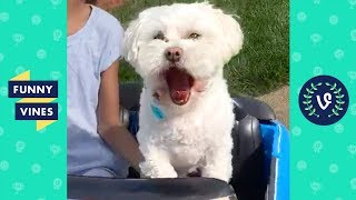 TRY NOT TO LAUGH - Funny Pets That Will Brighten Your Day!