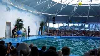 Дельфинарий в Минском зоопарке 1.(, 2012-07-11T15:54:52.000Z)