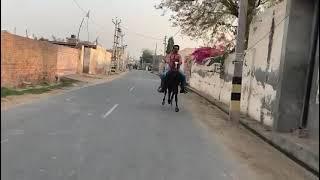 Reval chal  My new horse storm  #manusekhon #Babastudfarm