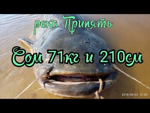 СОМ 71кг и 210см.Река Припять.Лунинецкий рай.