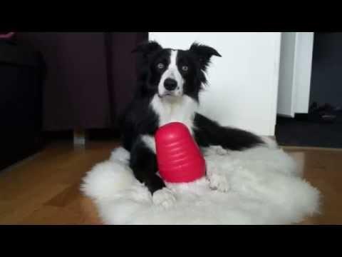 Nina Ottosson: DogPyramid