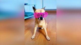Смешные кошки и коты 2019 Смешные коты приколы 2019 Видео про кошек и собак до слёз, видео коты #64