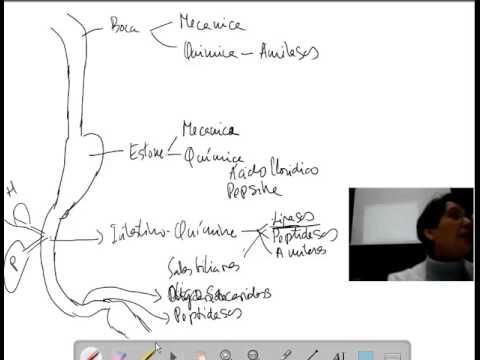Fisiología del aparato digestivo. Introducción (1)