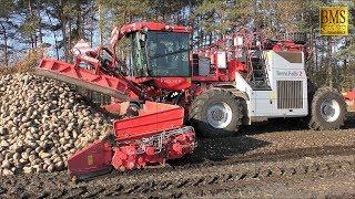 Die rote Rübenmaus - LKW Rübenverladung Rübenernte Nordzucker mouse loader loading sugar beet 2018
