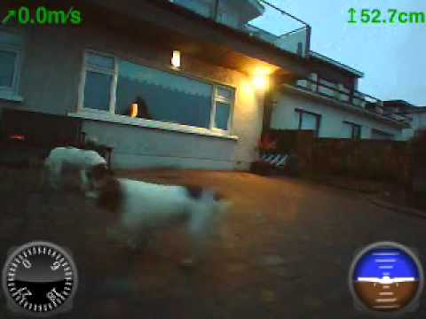 Low level Drone flight stalking the dogs