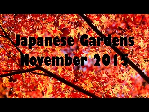 A visit to the Japanese Gardens in Fort Worth, Texas