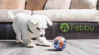 Pebby: The Most Advanced Smart Ball! Play Anytime, Anywhere.