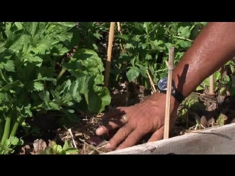 Step-by-Step Guide to Vegetable Gardens : Vegetable Gardening 101