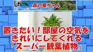 置きたい!部屋の空気をきれいにしてくれる「スーパー観葉植物」7種